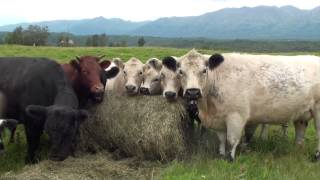 Alaska Grown- Grasses