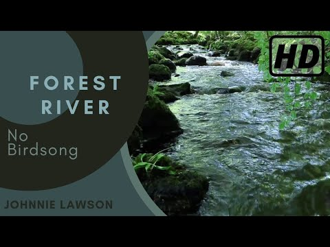Relaxing Forest Sounds of Nature-Soothing Natural Sounds for Sleeping-Calm Relaxation & Meditation
