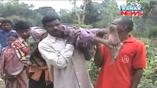 Man Carries Body of Mother On Shoulder From Hospital In Jajpur