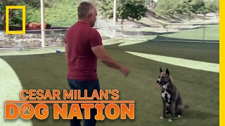 Learning Control | Cesar Millan's Dog Nation