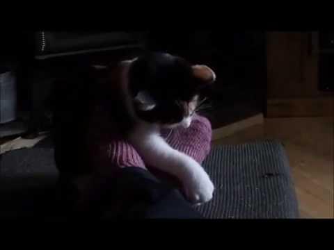 Xxx Mp4 Clara Kitty Attacking My Toes 3gp Sex
