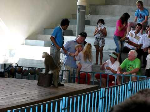 Monkey attacks children