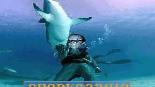 psycho volunteer dinner, big luxury sharks