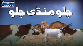 Chalo Mandi Chalo | Bakra Eid Ka Samaa | 05 Sep 2016