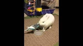 Bunny and Bird compete at snacktime