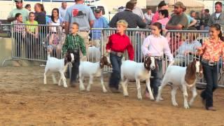 2012 Wayne Fair - Open Market Meat Goat Show