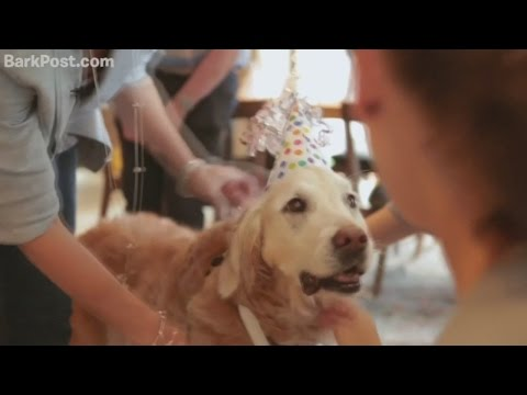 Last surviving 9/11 search dog celebrates her 16th birthday