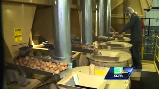 With demand from China slowing, California walnut farmers are on alert