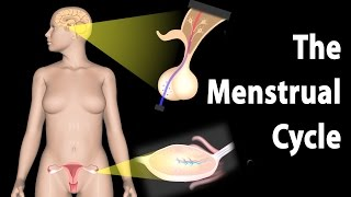 Hormonal Control of the Menstrual Cycle, Animation.