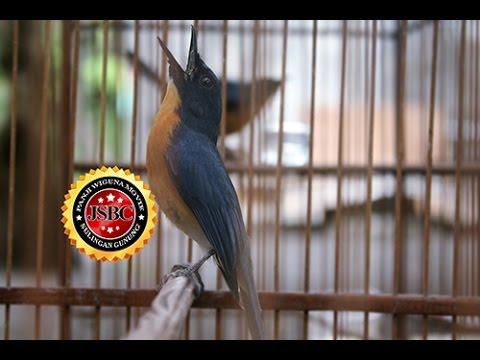 SUARA BURUNG : Aksi Sulingan Milik Om Rizal FU JSBC