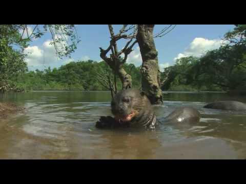 Rivers of the sun Amazon 4 6