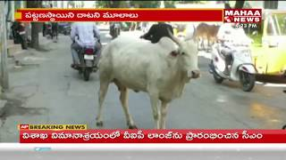 Tirupati People Facing Problems with Animals on Roads    Mahaa News