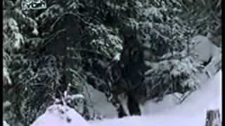 1. Bosnjacka brigada Igman - ratni put