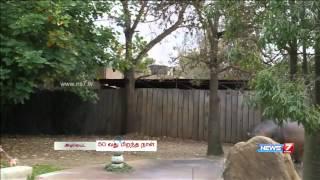 Brutus the hippo turns 50 in Australia   World   News7 Tamil