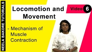 Locomotion and Movement - Mechanism of Muscle Contraction