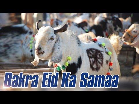 Mandi Ka King Kaun   Bakra Eid Ka Samaa   31 Aug 2016