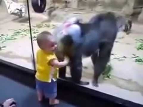 Xxx Mp4 Monkey And Baby Funny 2016 Lovely Baby 3gp Sex