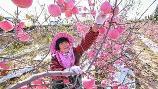 عندما يقع نظرك علي هذه الفواكهه العجيبه ستراها كأنها من كوكب اخر   WOW !!Amazing Fruit