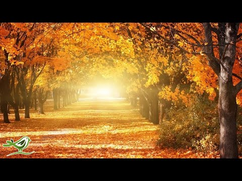Romantic Relaxing Music Beautiful Piano Music Violin Music Cello Music Soothing Music ★93