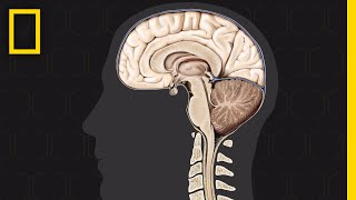 Brain 101 | National Geographic