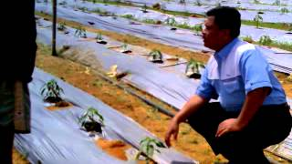 D.I Grow di Ladang Cili NIlai , Negeri Sembilan - 013-697 3310