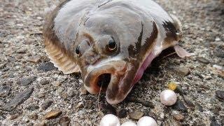 Angeln auf Plattfisch: Grundangeln auf Butt im Hamburger Hafen