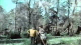 فيلم عماشة فالأدغال