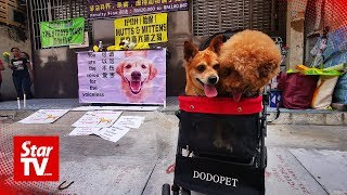 Animal welfare groups protest against canine shooting incident