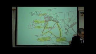 ANATOMY; CIRCULATORY SYSTEM; PART 4; CARDIAC DISORDERS by Professor Fink