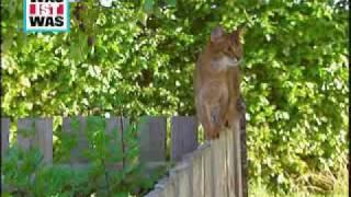 WAS IST WAS Katzen: Wie ist der Körper von Katzen aufgebaut?