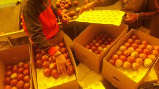 Apple grading and packing at Himachal