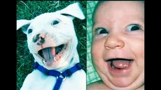 try not to laugh compilation-funny videos 2018 try not to laugh challenge