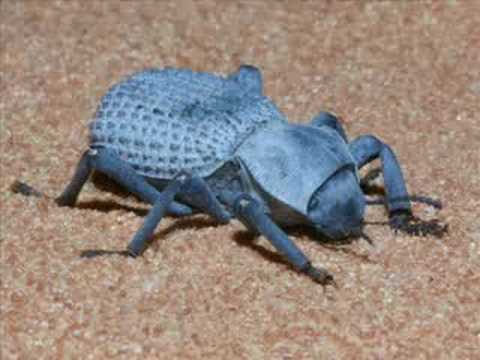 Amazing Bugs You Probably Didn t Know Exist
