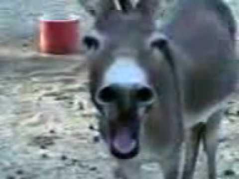 Xxx Mp4 Accidently Donkey 3gp 3gp Sex