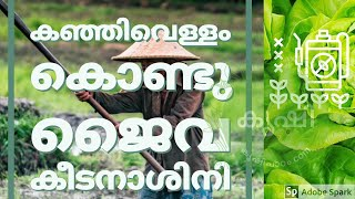 കഞ്ഞിവെള്ളം കൊണ്ടൊരു ജൈവ കീടനാശിനി - natural pesticide using rice water, neem cake and garlic