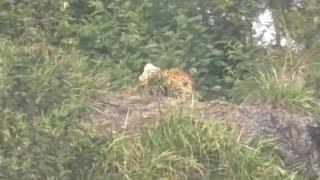 Leopard comes calling in Ettadi village
