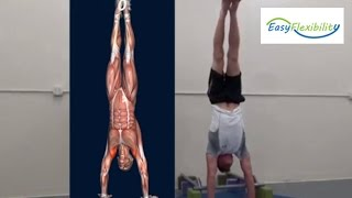 How to Handstand Progression Tutorial Muscle Animation Promo EasyFlexibility