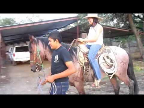 Xxx Mp4 My Little Sister Riding A Horse 3gp Sex