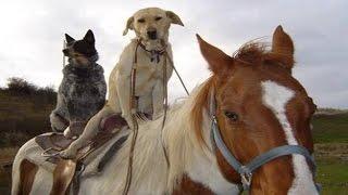 HORSES ★ Funny Horse Videos [Funny Pets]