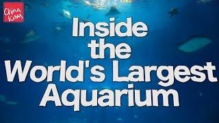 Inside the World