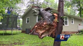 Trees crush cars, sheds in Greensboro