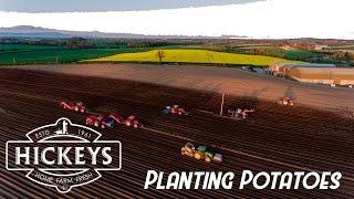 Hickeys Home Farm - Planting Potatoes 4k