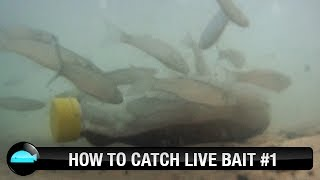 How To: Catch Live Bait | We Flick Fishing Videos