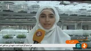 Iran Plants tissue cultivation method report, Mazandaran province روش كشت بافت گياهان مازندران