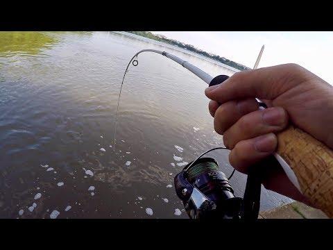 Xxx Mp4 Hunting Down The FRANKENFISH In Washington D C Bank Fishing The Tidal Basin 3gp Sex