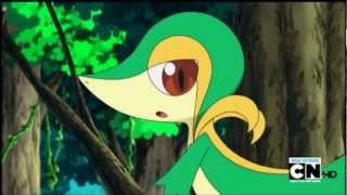 ~Snivy AMV~ California Girls