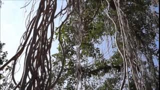 Vuhinchani roju trailer (A hurror short film)