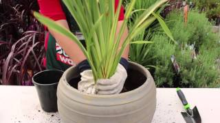 How to Pot A Plant - Team Member Hints & Tips
