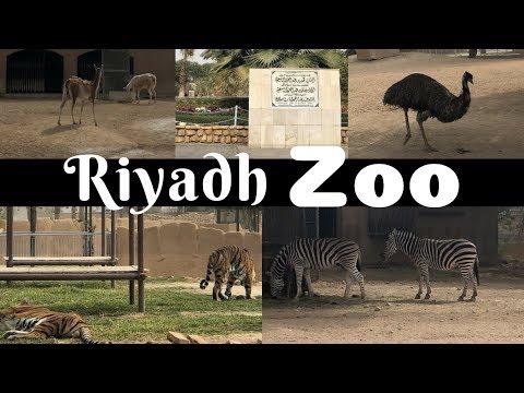 Xxx Mp4 Al Riyadh Zoo SAUDI ARABIA Pinay In Saudi 3gp Sex