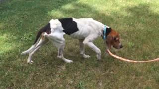 Wishbone the dog